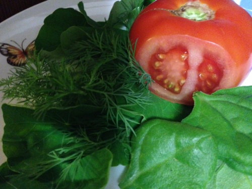 Back to gardening, back to blogging