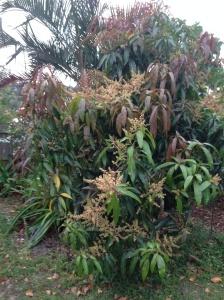 The tree full of flowers