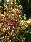 Mango Tree Flowers